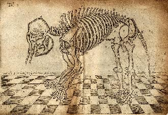 The Elephant of Dundee, without its clothes on, as engraved by Gilbert Orum- click to view full-size